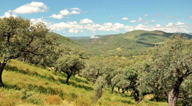 Sierra de Aracena y Picos de Aroche