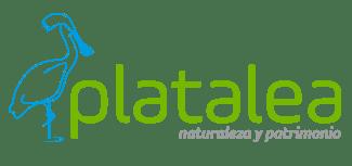 Platalea
